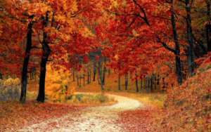 The Best of Fall Travel in the US