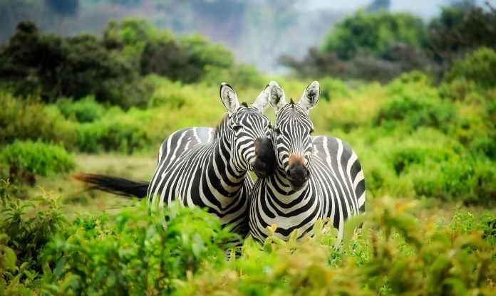 Full List of Zoos in Nigeria and their locations